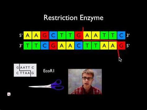 Resume molecular biology skills